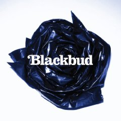 blackbudlabum